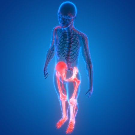Human Body Bone Joint Pains Leg Joints Anatomy Stock Photo