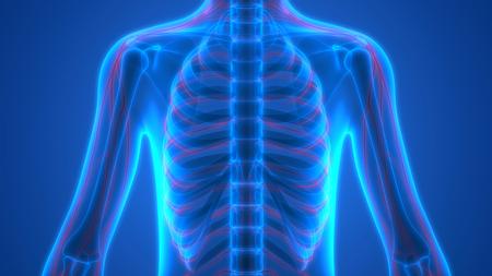 신경 조직 해부학을 가진 인간 해골 스톡 콘텐츠