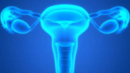 reproductive: Female Reproductive System Anatomy Stock Photo