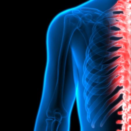 medula espinal: Del cuerpo humano Bone Joint Dolores (médula espinal)
