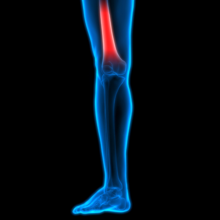 Menschlicher Körper Knochen Gelenkschmerzen (Fuß Gelenke Und Knochen ...