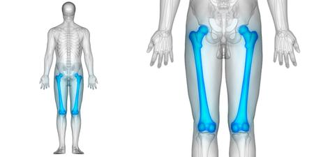 Human Body Bone Joint Pains Anatomy (Femur)
