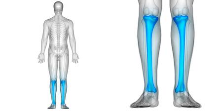 인체 뼈 관절 통증 해부학 (경골)