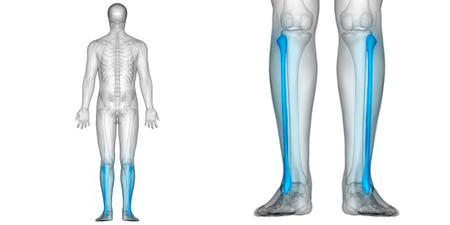인체 뼈 관절 통증 해부학 (Fibula)