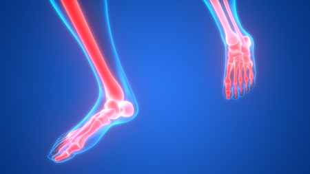 Human Body Bone Joint Pains Anatomy (Foot and Leg Joints)