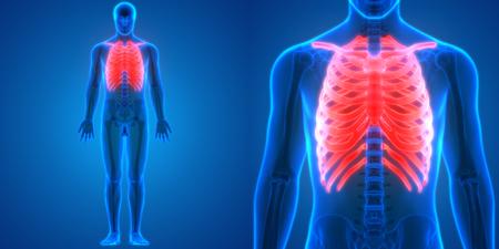 3D Illustration of Human Body Bone Joint Pains Anatomy