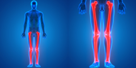 인간의 신체 뼈 관절 통증 해부학의 3D 일러스트