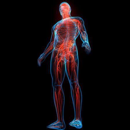 3D Illustration Concept of Central Organ of Human Nervous System Brain Anatomy Foto de archivo