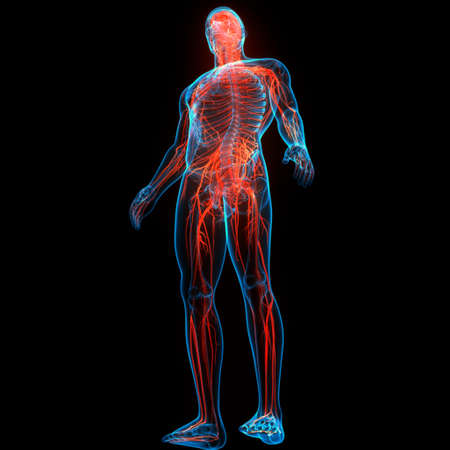 3D Illustration Concept of Central Organ of Human Nervous System Brain Anatomy Imagens