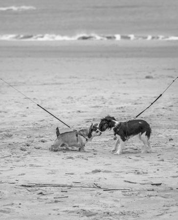 danish: The dogs Stock Photo