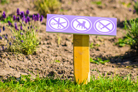 Restriction sign in lavender field photo