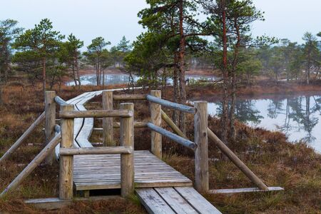 Scenic view of swamp with wooden path