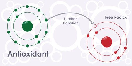 vector illustration of antioxidant molecule model and free radical with electron donation process