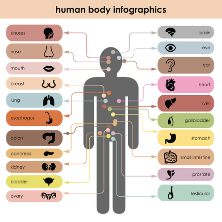 vector illustration  human body  organs icons