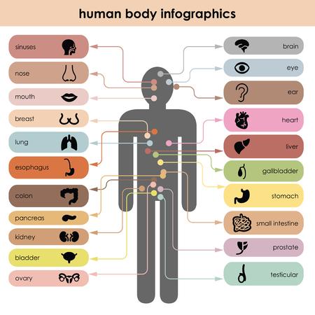 vector illustration  human body  organs icons