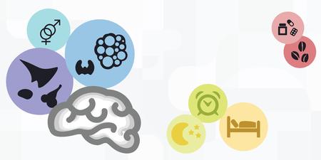 illustration vectorielle des pratiques d'équilibrage des hormones comme une alimentation saine et le sommeil avec le cerveau et les glandes