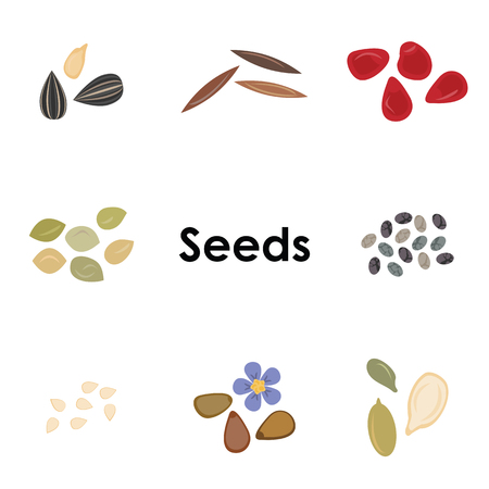 vector illustration of different types of seeds colored icons like flax hemp or pomegranate