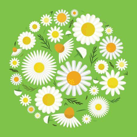 vector illustration of chamomile flowers in circle design 版權商用圖片 - 134580303