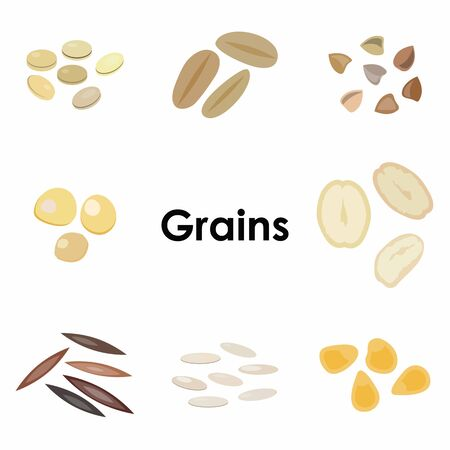 vector illustration of  different types of grains colorful icons