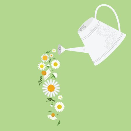 vector illustration of chamomile flowers and watering can for natural nutrients Иллюстрация