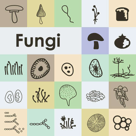 vector illustration / fungi icons set Illustration
