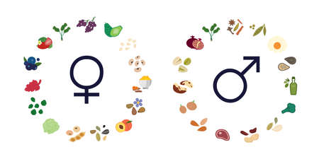 vector illustration of male and female symbols and food for balancing hormonal regulation