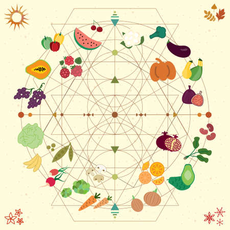vector illustration of food and periods wheel for seasonal fruit and veggies chart