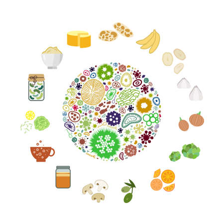 vector illustration for probiotic foods for healthy digestion and intestine immunity