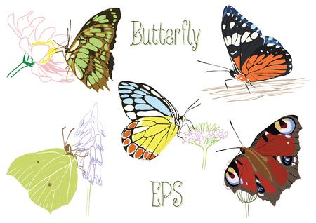 Butterflies, sitting on flowers and tree Illusztráció
