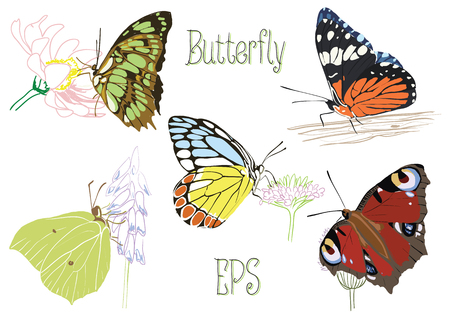 Butterflies, sitting on flowers and tree Illustration