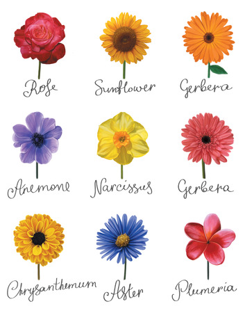 Set of flowers with handwritten titles