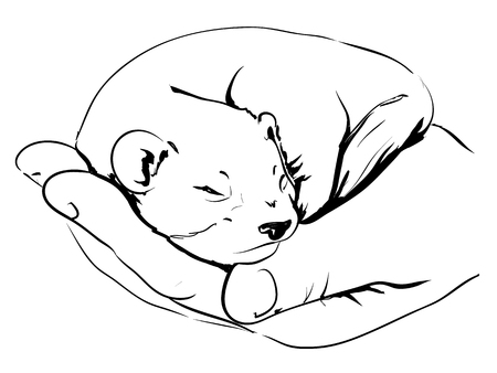 small mink on hand, graphic sketch Illustration