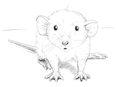 small mouse, black and white graphic sketch