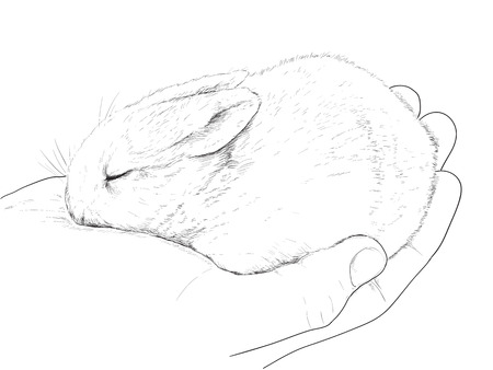 small rabbit on hand, graphic sketch