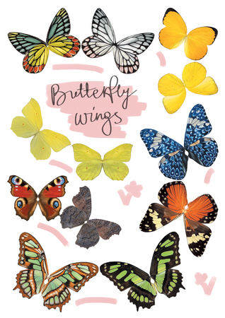 Butterfly wings set in real size, two sides Stock Photo