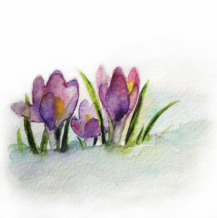 Watercolor snowdrops, spring flowers