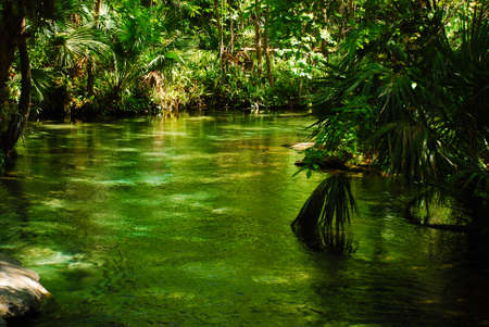 Rock springs run in Kelly state park in middle Florida has wonderfull clear hot springs and cenote Archivio Fotografico