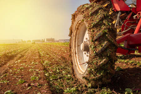 Agriculture concept. Tractor Wheel covered in mud and plowing field in the background.