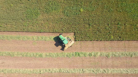 Combine harvesting Wheat for silage in a massive agriculture field.