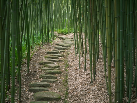 zen stones: Bamboo Forest Trail Stock Photo