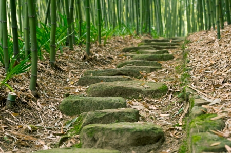 Bamboo Forest Trail Stock Photo - 13911843