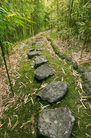 stepping stone: Bamboo Forest Trail Stock Photo