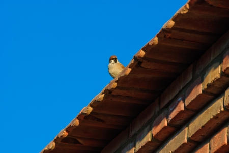 a bird on the roof photo
