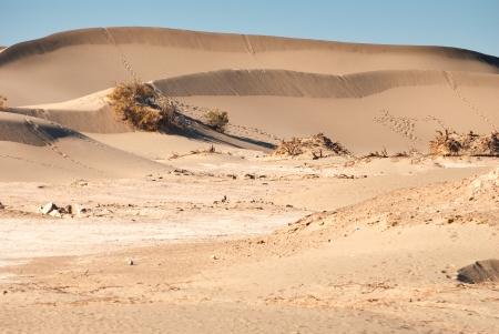 arenas movedizas: Desierto en Inner Mongolia, China