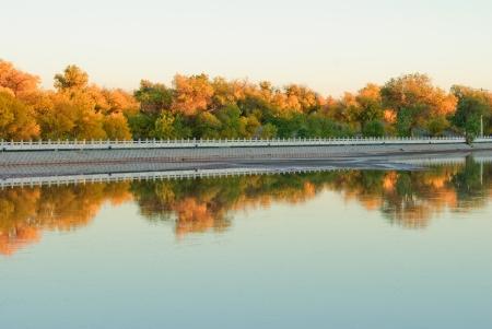 euphratica beside the river, China photo