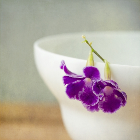 Background with macro purple flower Stock Photo - 21186708