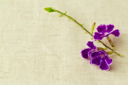 small purple flower: Background with small purple flower on fabric