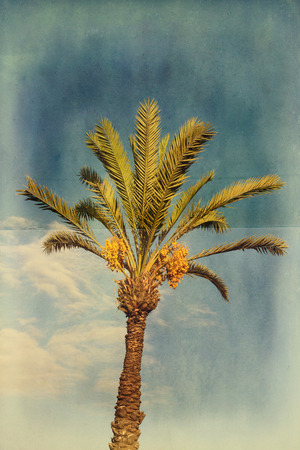 Grunge palm tree with dates over blue sky Stock Photo