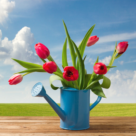 bailer: Spring tulip bouquet on wooden table over beautiful blue sky
