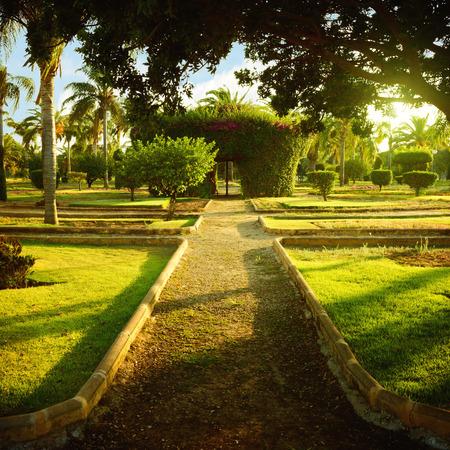 straight path: Straight path in botanical garden